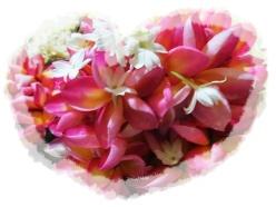 Sri Lanka Kandy Flowers