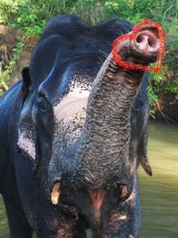 Sri Lanka, Sigiriya Elephant