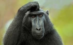 Thinking Ape
